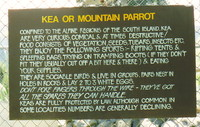 A warning sign about keas