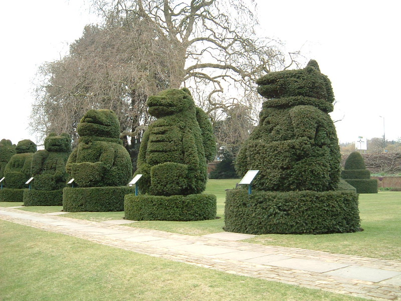 Topiary hedges at Hall Place